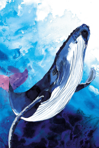 Blue Whale illustration by Sarah Maycock for Natural History Museum